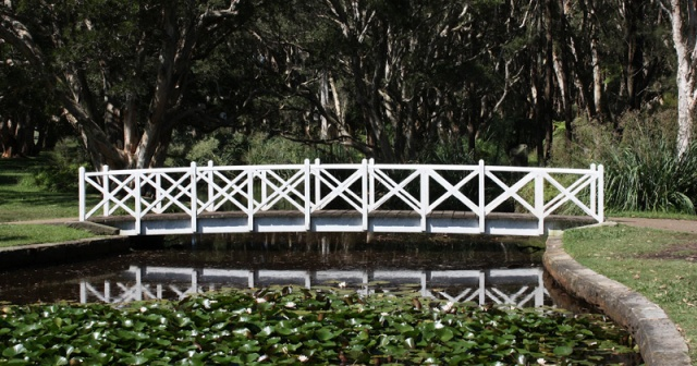 White wooden bridge over lily pond.